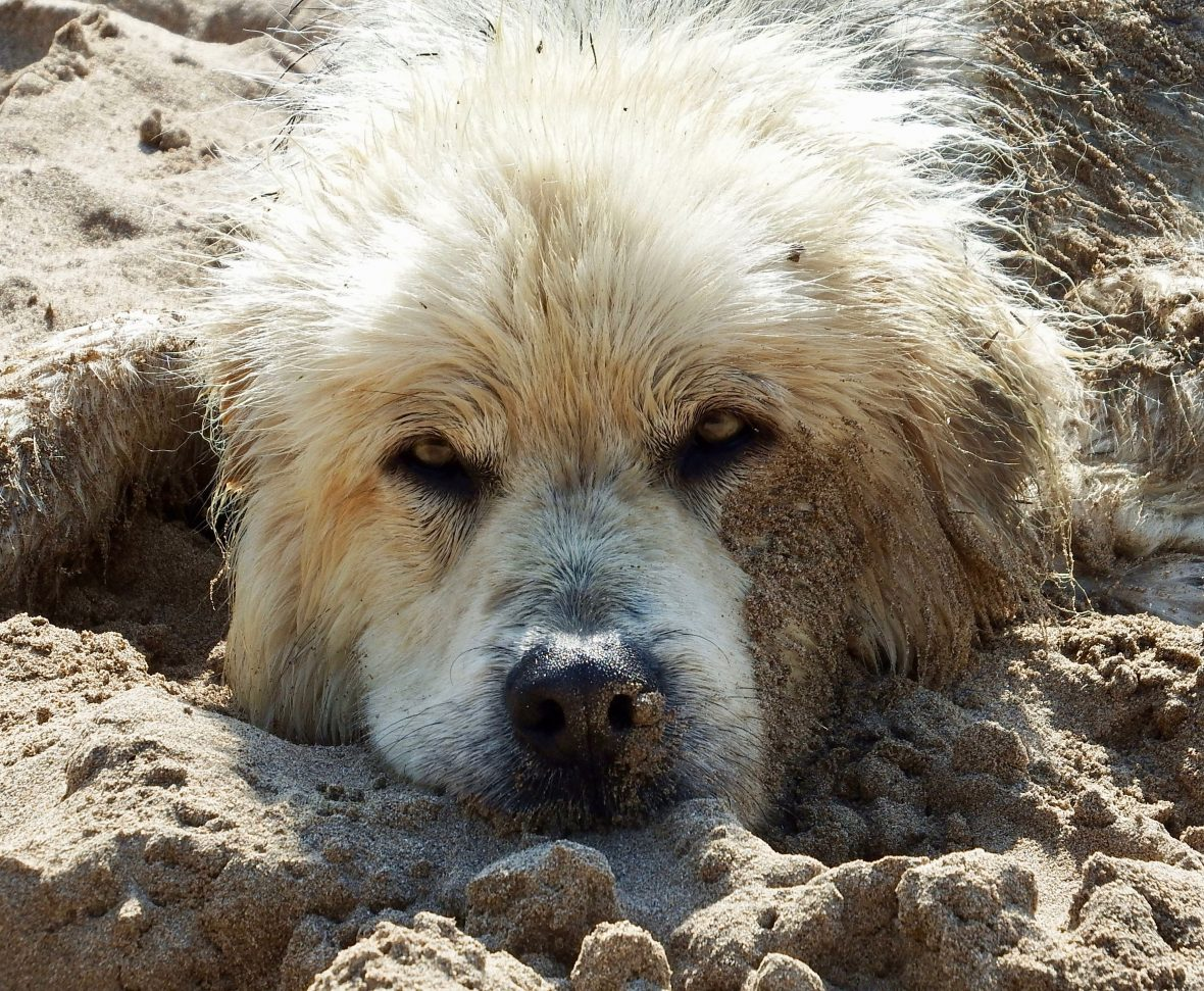 Happy Birthday, Simply DogWalk!